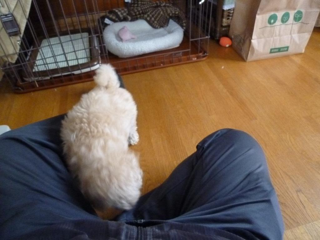愛犬「小麦」komugi